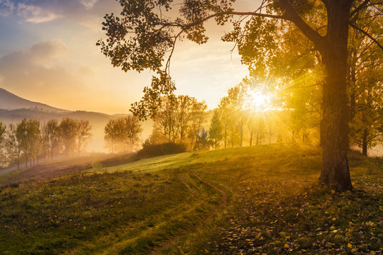 morning fog among trees