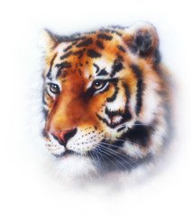 tiger illustration , wildlife animals