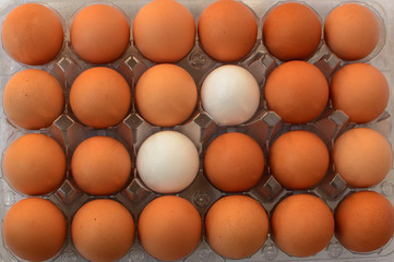 Two white eggs between other brown eggs