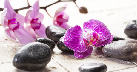 zen femininity with orchid flowers and massage stones