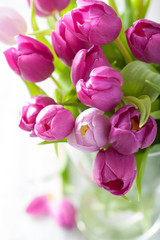 Fototapete - beautiful purple tulip flowers in vase