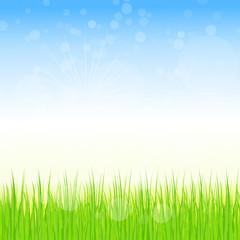 wiese,rasen,gras,grün,floral,frühling,frühjahr,hell,licht