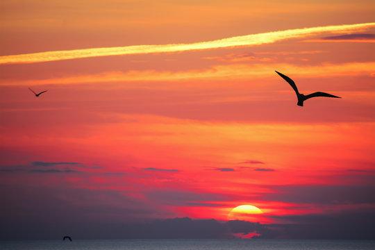 bird silhouettes at sunset