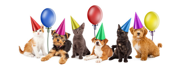 Puppies and Kittens in Party Hats With Balloons