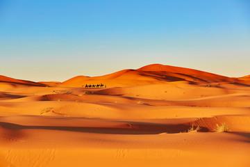 Poster de jardin Desert de sable Camel caravan in Sahara desert