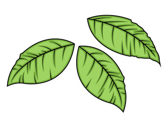 Green Leaves Vector Elements