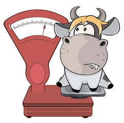 Aluminium Prints Baby room A small cow and weighing scale. Cartoon