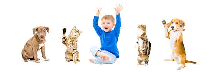 Group of a cheerful pets and boy together