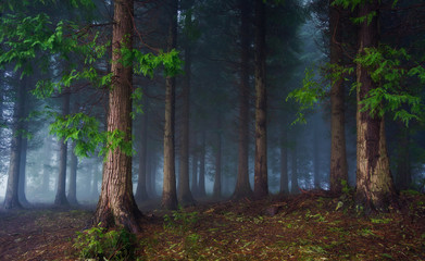 Wall Murals Forest dark forest