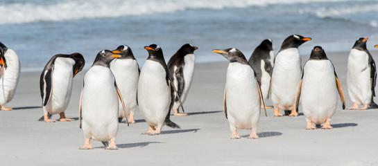 Group of the penguins near the Atlantic Ocean