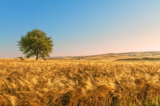 Tra Puglia e Basilicata: paesaggio agreste estivo.ITALIA