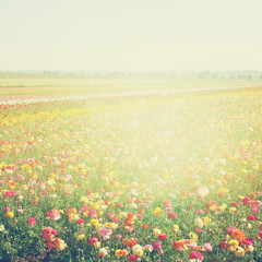 abstract photo of wild flower field and bright bokeh lights. cro