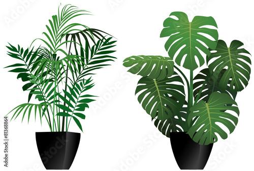 Piante filodendro e kenzia in vaso immagini e vettoriali for Pianta kenzia