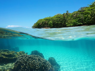 Lush tropical shore and corals underwater