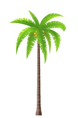 Wall Mural - Coconut palm tree on white background