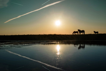 reflets sur les marais