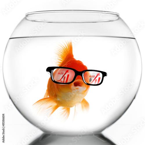 blob fish in glasses