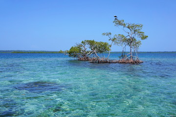 Seascape with secluded mangrove trees in the sea
