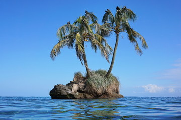 Small islet with coconut palm trees and sea birds