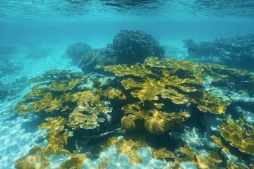 Underwater reef with elkhorn coral Caribbean sea