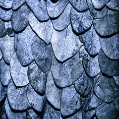 Blue leaves background in the form of scales of a snake