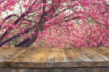 image of Spring Cherry blossoms tree. retro filtered image, sele