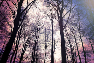 Abstrakter Wald Textur