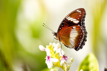 exotic butterfly on the flower