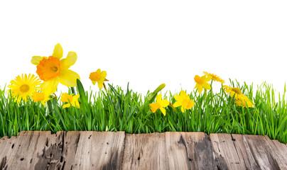 Blumen karte Freisteller