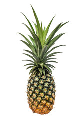 Pineapple isolated white background with clippingpath