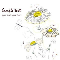 Romantic daisy flower greeting card vector