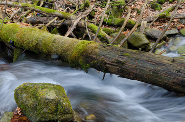 Stump and the creek