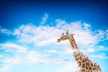 giraffe painted