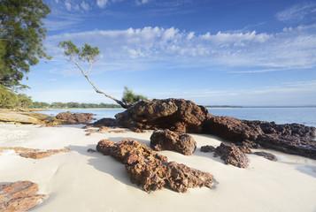 Fotobehang - Tree on a Rock, Jervis Bay Australia