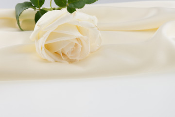 white rose on ivory silk satin