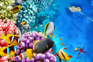 Foto op Canvas Onder water Underwater world with corals and tropical fish.