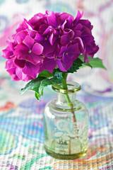 beautiful purple hydrangea flowers in a vase on a table .