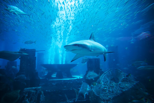 Aquatic animals in huge aquarium, shark in foreground