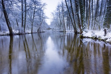 Winter forest with beautiful river