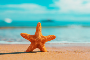 big big orange starfish on the seashore.  summer concept.