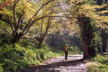 Young man with a backpack going by the beatifull forest pathway