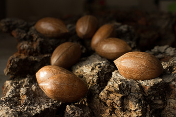 brown mature nuts on a gray background bark