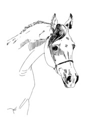 arabian horse sketch vector