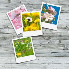 Endlich Frühling, Frühlingserwachen, Sofortbild, Blütenfülle