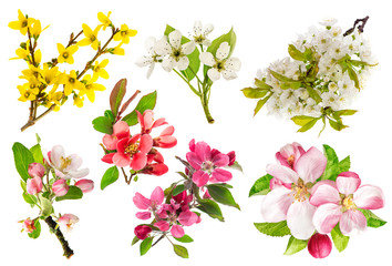 Blossoms of apple tree, cherry twig, forsythia. Set of spring fl