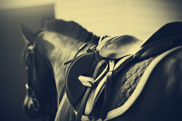 Fototapeten Reiten Saddle with stirrups on a back of a horse