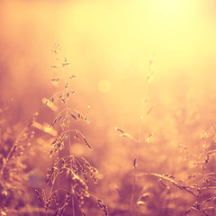 Vintage golden color blurry meadow background