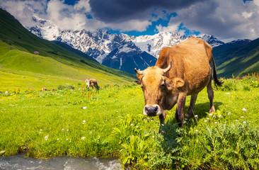 Wall Mural - Cows grazing