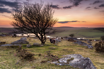 Wall Mural - Dusk on Bodmin Moor