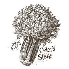 celery stalk vector logo design template. fresh vegetables, food